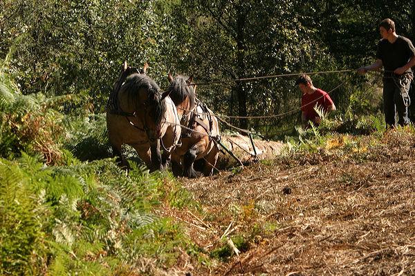 Celtic Horse Logging,Ecological Logging, Sustainable ...